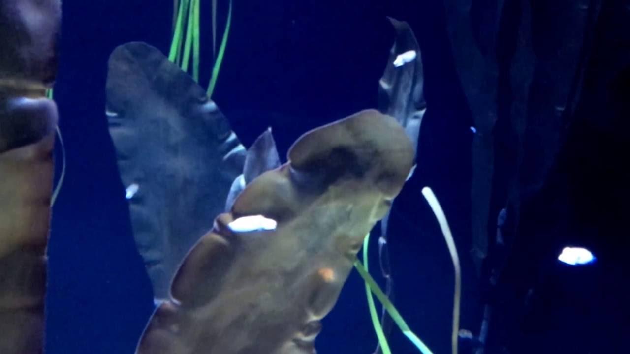 Fish in ripleys aquarium - Baby Cuttlefish Eating At Ripley S Aquarium Of Canada