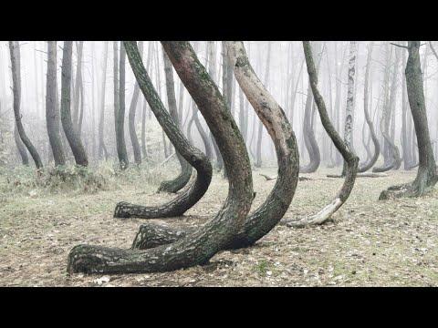 ПЛЯШУЩИЙ ЛЕС — природное МЕСТО СИЛЫ или АНОМАЛИЯ