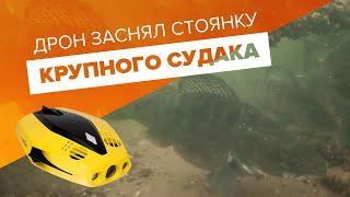 КРУПНЫЙ СУДАК Съемки с подводного дрона Chasing Dory