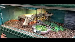위키즈 프로젝트: 파충류 친구들 WithKids Pro…
