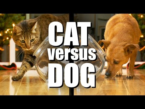 CAT VS DOG - Tasty Treat Challenge