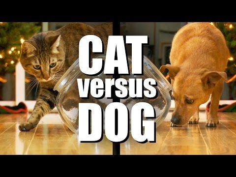 CAT VS DOG - Tasty Treat Challenge