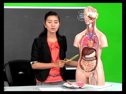 ระบบต่างๆของร่างกายมนุษย์