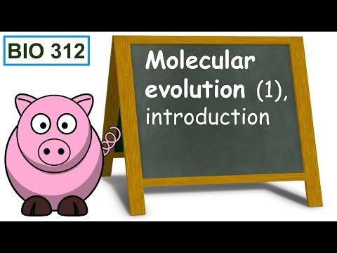 Bio 312 video 87: Molecular evolution 1, introduction.