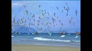 BIỂN NHỚ Thơ Chương Hà; Nhac 'Bay Đi Cánh Chim Biển' Đức Huy, piano Harold Mann; pps NTVi & CH