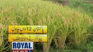 Pakistan's Rice