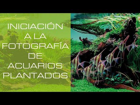 Iniciación a la Fotografía de Acuarios para Concurso - Photography for aquarium Contests - PezVerde
