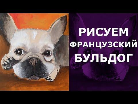🐶 Как нарисовать собаку маслом французский бульдог