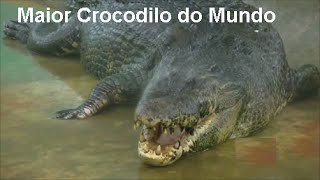 O Maior Crocodilo do Mundo - Crocodile Biggest in The World