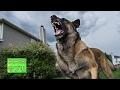 驚愕の事実…米国で毎年10,000頭もの犬が警官に殺される原因と対策について考える