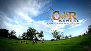 Dog Training Of Carver Kennel