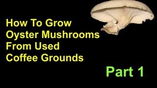 How To Grow Oyster Mushrooms From Used Coffee Grounds Cheap And Easy - Part 1