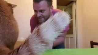 Тушеная курица по Румынски..как делаю я