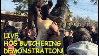 Annual Hog Butchering Demonstration at the Old South Farm Museum