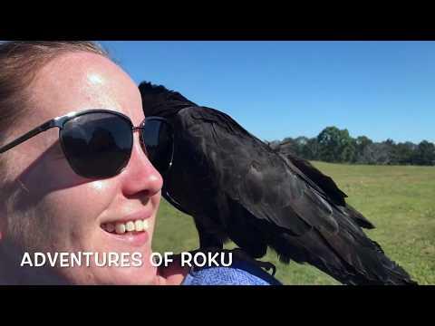 Cockatoo & Conure Fun