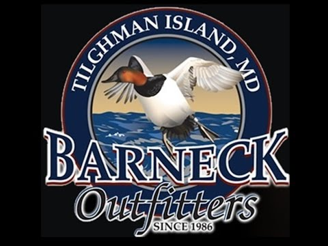 Maryland Sea Duck Hunting-Barneck Outfitters