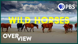 Wild Horses: America's most beloved invasive species? | 4K Drone Footage