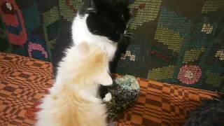 Зачем в доме кот?.. или Когда раздолье для мышей