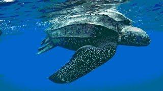 Животные, размеры которых поражают, не фотошоп