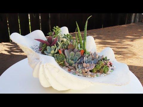 Stunning Succulent Garden In Sea Shell Planter