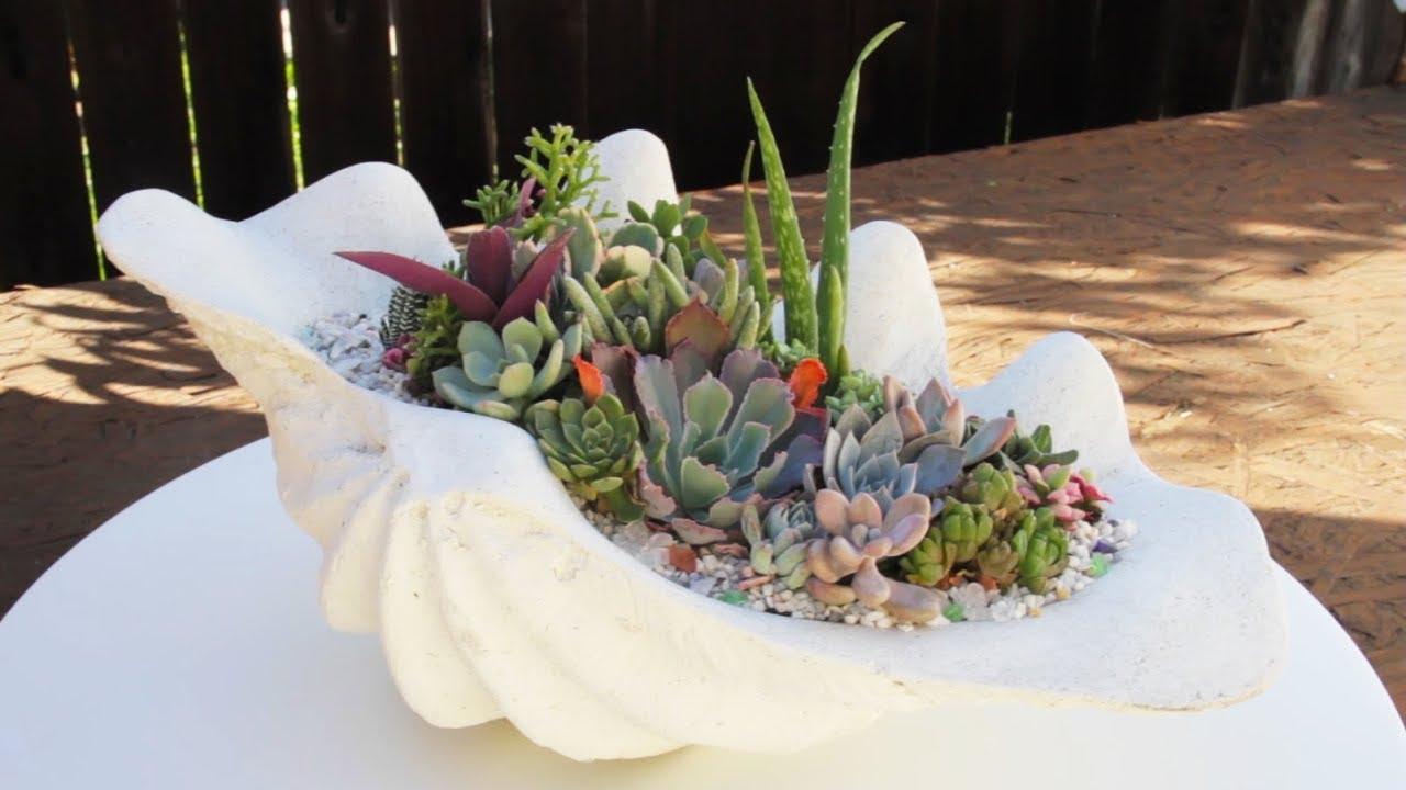 Top Stunning Succulent Garden In Sea Shell Planter - YouTube GR33
