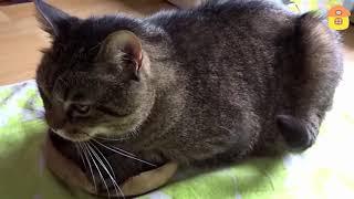 Шутки и приколы с котами. Смешные коты. Смешные кошки.