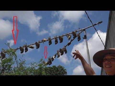 Bẫy Chim Sẻ | Hãy Bỏ Thế Cắm Vào Lỗ Trụ Điện Đi Và Thử  2 Sào Cô Đơn Này