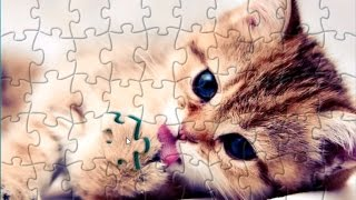 Cute Fluffy Kitten Puzzle Game Jigsaw Rompecabeza