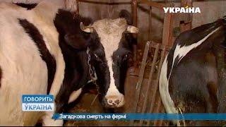 Загадочная смерть на ферме (полный выпуск) | Говорить Україна