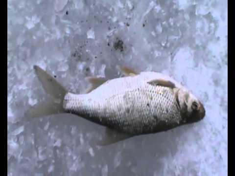 милятино водохранилище рыбалка