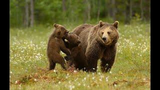 рыбалка отдых встречасмишкой Встреча с медведем во время рыбалки