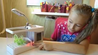 Аквариум с рыбкой на детском столе!! Распаковка, обзор. Aquarium fish on the children's table!