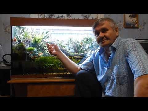 Здоровый аквариум.Основные принципы.