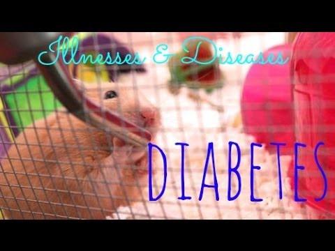 Hamster Illnesses & Diseases | Diabetes