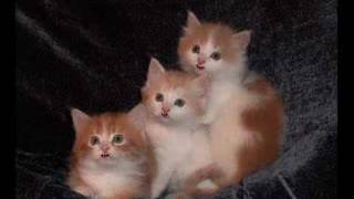 The Three Kittens