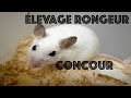 Elevage rongeurs + Concour