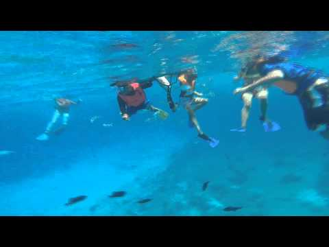 Snorkeling In Cozumel - Jellyfish