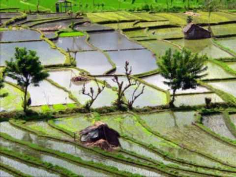 Ecouter le riz pousser dans les rizi res de bali 0004 youtube - Comment pousse les kiwi ...