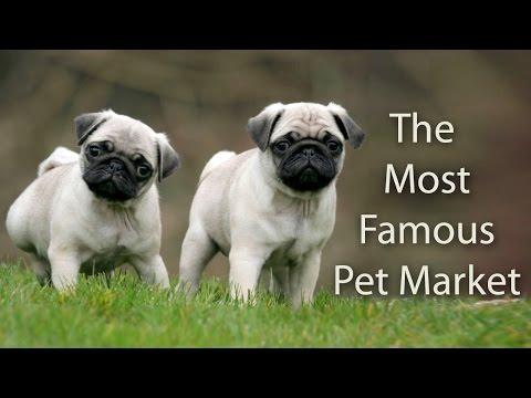 Amazing Pet Shops in Mumbai ! CRAWFORD MARKET ! 2017