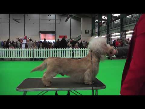 Dandie Dinmont Terriers at National Terrier 2009  part 3