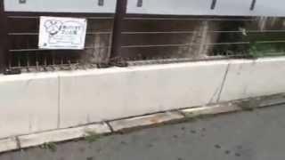 【クリオ武蔵新城六番館】 提供:きらめき不動産☆0800-111-1108 http://...