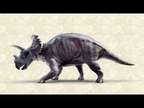 New Horned Dinosaur Discovered: Wendiceratops Pinhornensis
