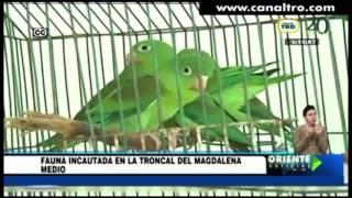 Fauna incautada en la troncal del Magdalena Medio