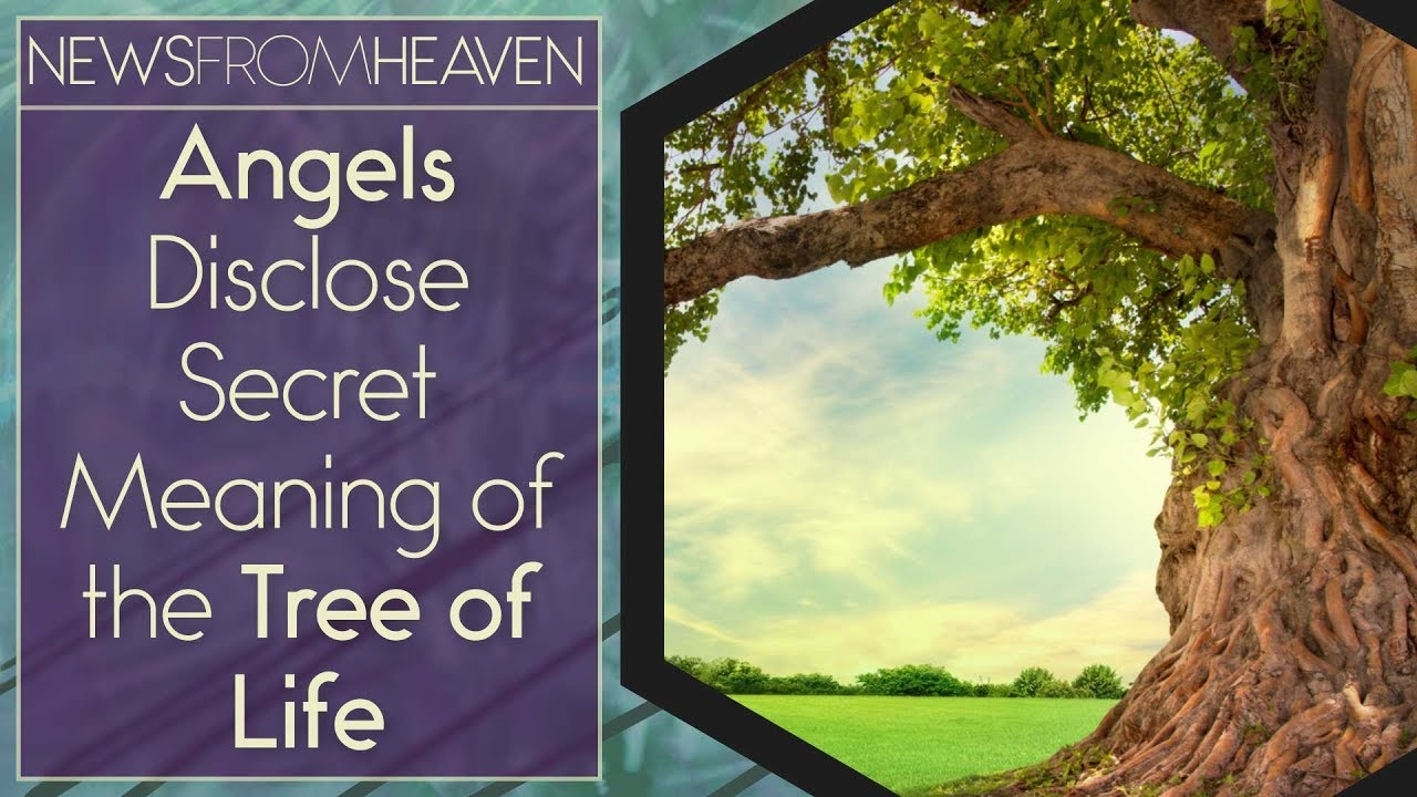 Angels Disclose Secret Meaning of the Tree of Life - News ...
