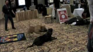Sit Means Sit Super Dog Puma #3