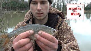 Wędkarstwo wyczynowe - Angielski sposób na płocie - Tyczka, spławik oraz podawanie robaków z ręki