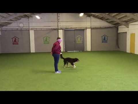 Dogdancing F2