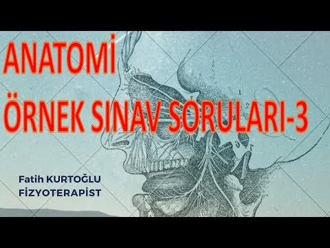Anatomi Öğreten Örnek Sınav Soruları-3 | Önlisans-Lisans |
