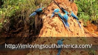 Jungle Amazon ( I´m loving South America )