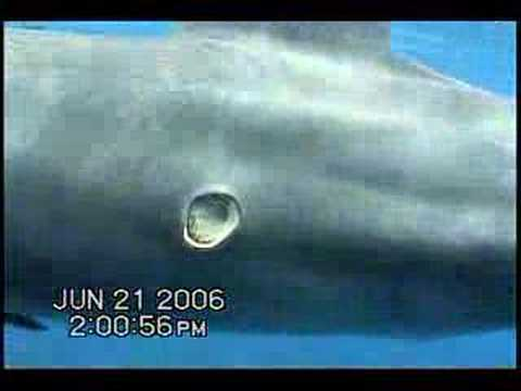 White shark peter benchley pdf